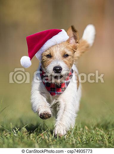 navidad, feliz, perro, santa, divertido, corriente - csp74935773