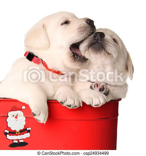 Cachorros navideños juguetones - csp24934499