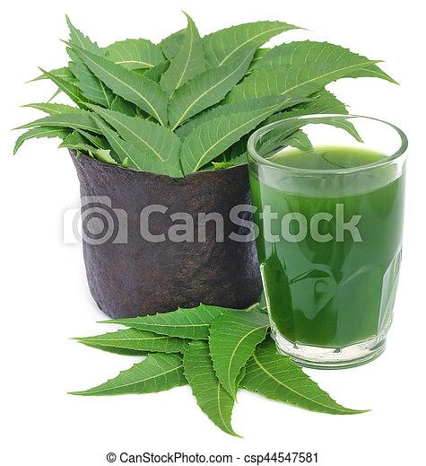 Neem medicinal sale con extracto - csp44547581
