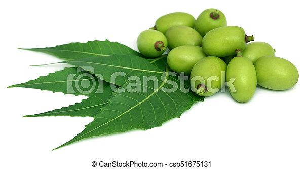 Neem medicinal se va con fruta - csp51675131
