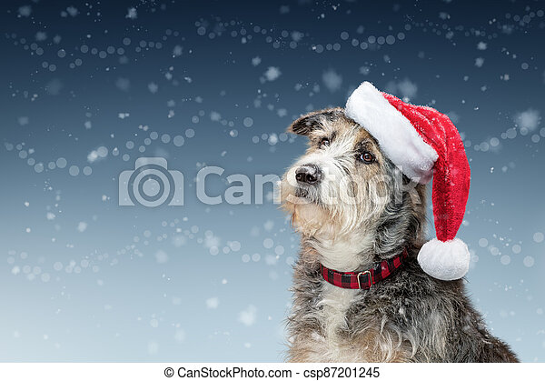 nieve, perro, espacio de copia, navidad, santa - csp87201245