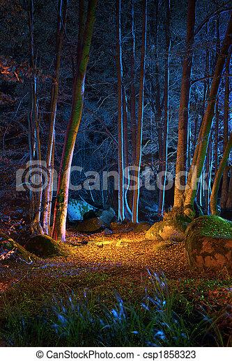 Noche mágica en el bosque - csp1858323