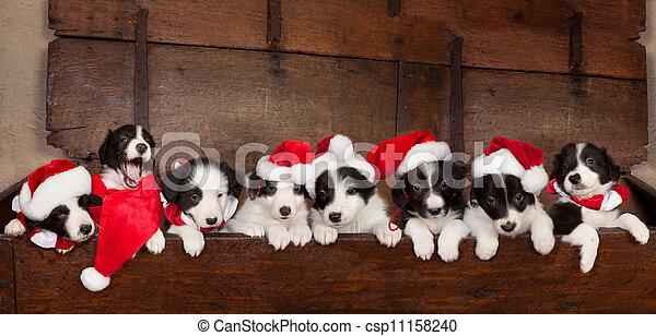 Ocho cachorros de navidad - csp11158240