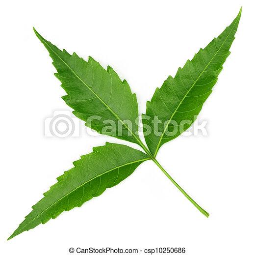 Las hojas medicinales tiernas - csp10250686