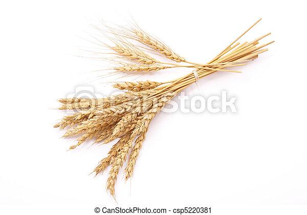 Orejas de trigo - csp5220381