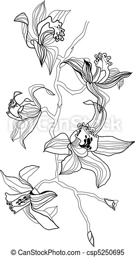 Orquídea - csp5250695
