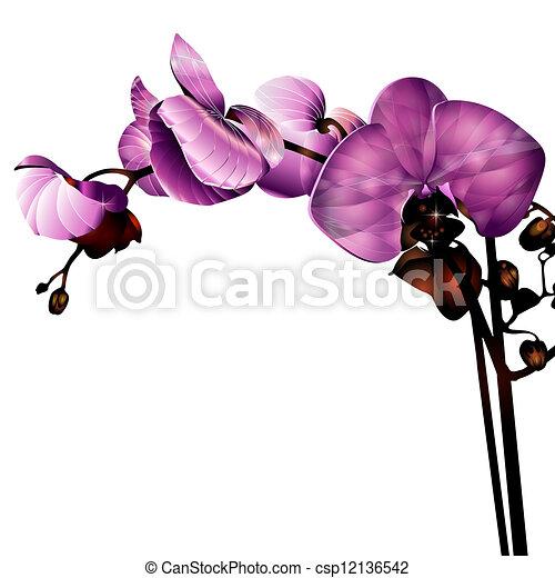 Orquídea - csp12136542