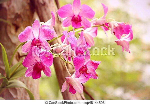 Orquídea rosa - csp48144506