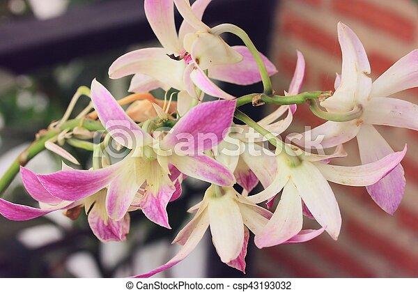 Orquídea rosa - csp43193032