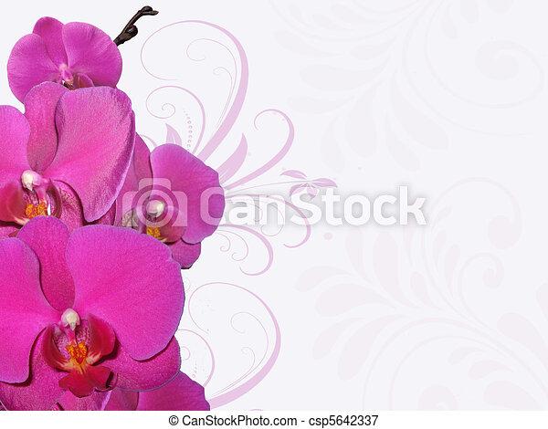 Orquídea - csp5642337
