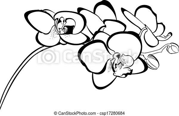 Orquídeas - csp17280684