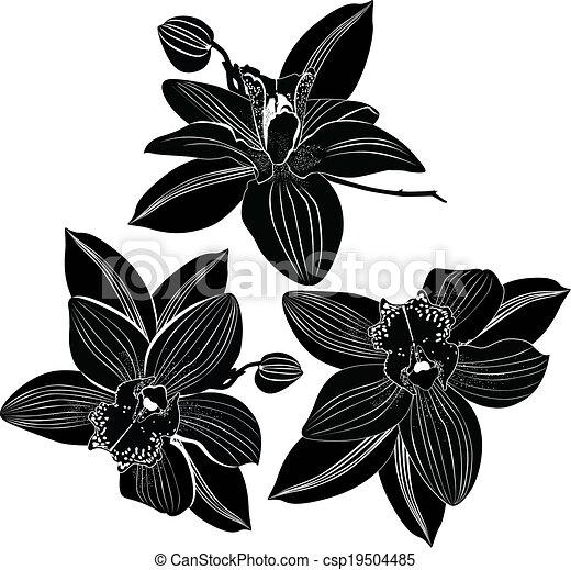 Las orquídeas flores están aisladas - csp19504485