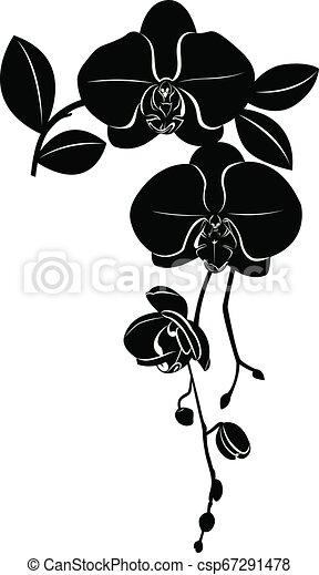 Las orquídeas flores están aisladas - csp67291478
