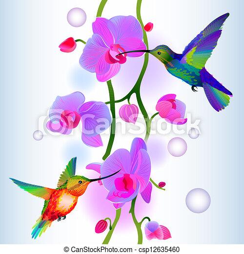 Antecedentes sin fisuras con orquídeas y colibríes - csp12635460