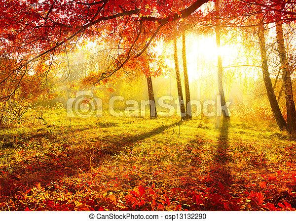 Parque de otoño. Árboles de otoño y hojas - csp13132290