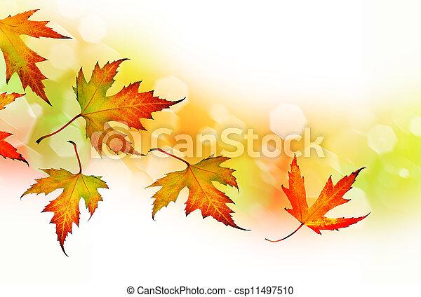 Hojas de otoño - csp11497510