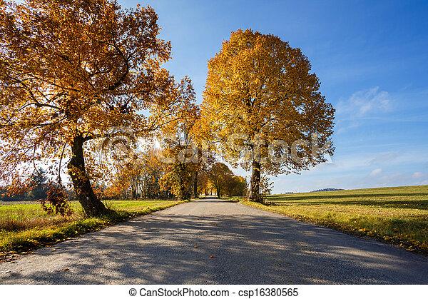 Camino rural en otoño con árboles amarillos - csp16380565
