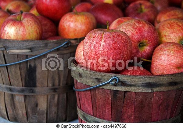 Manzanas de otoño - csp4497666