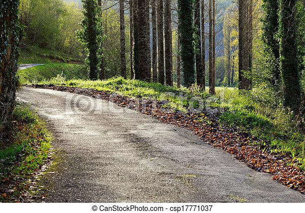 Un camino rural en un soleado día de otoño - csp17771037