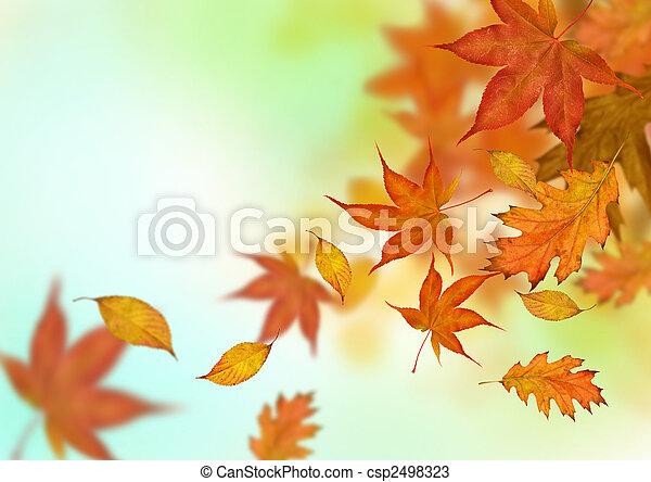 Las hojas de otoño caen - csp2498323