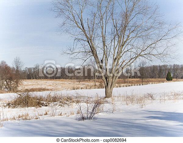 Un paisaje de invierno - csp0082694