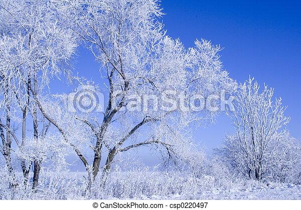Un paisaje de invierno - csp0220497