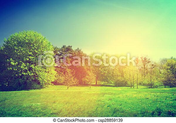 Un paisaje verde de verano soleado. Vintage - csp28859139