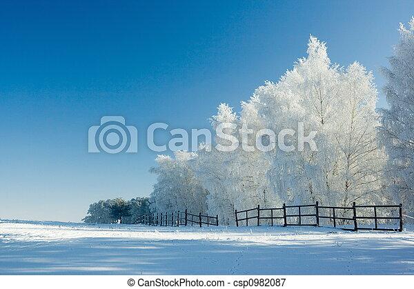 paisajes de invierno y árboles - csp0982087