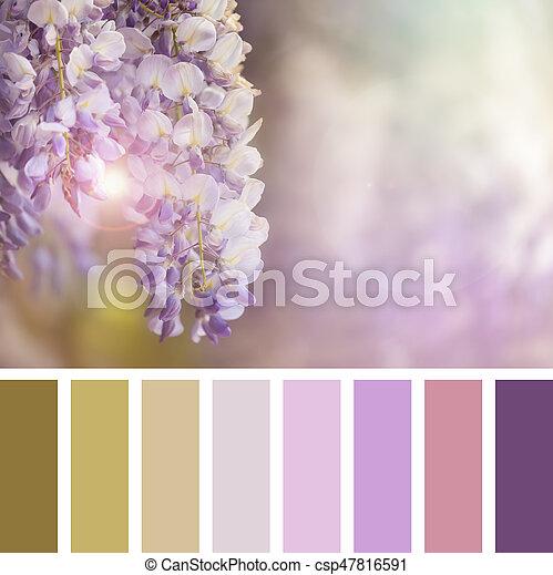 Paleta Wisteri - csp47816591