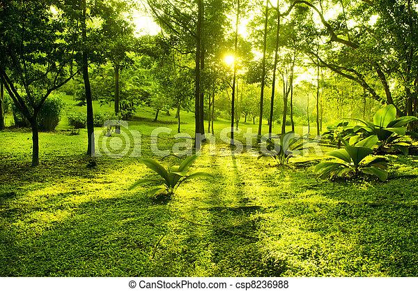 Árboles verdes en el parque - csp8236988
