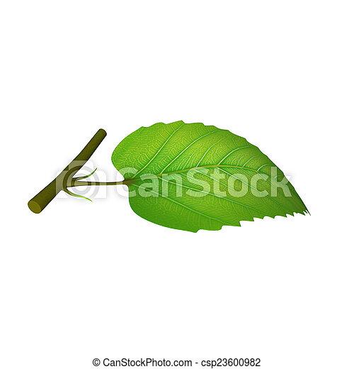 Partes de hojas - csp23600982