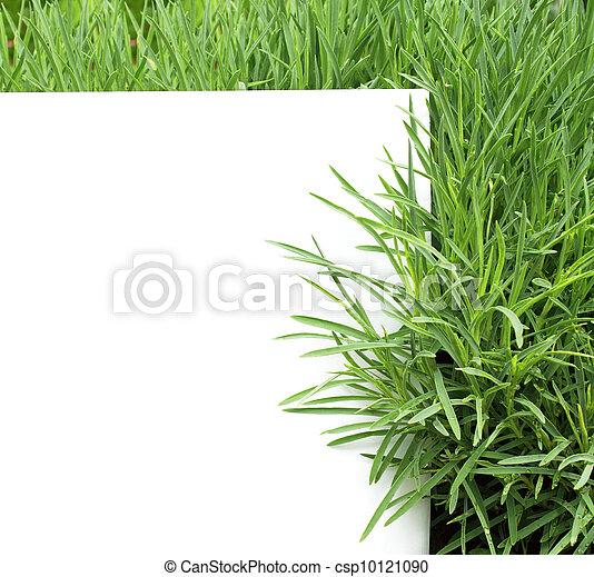 Hierba verde - csp10121090