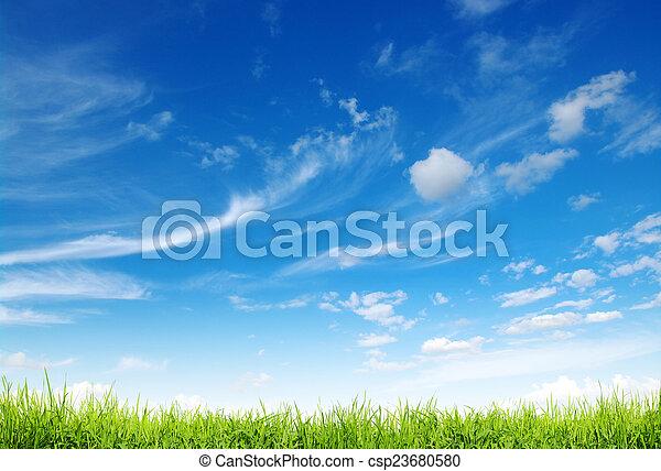 Hierba verde - csp23680580