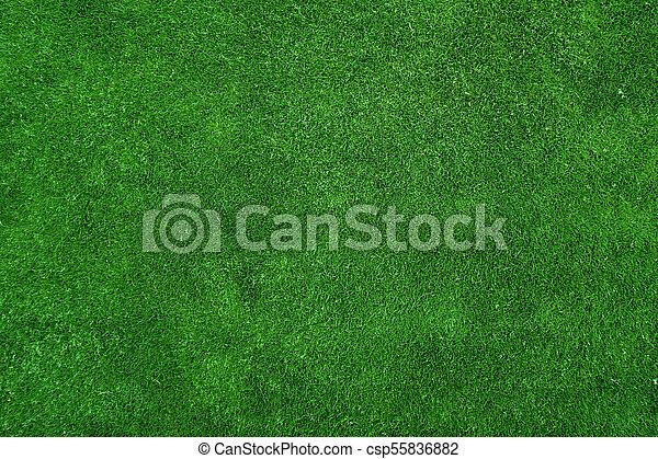 Textura de hierba verde - csp55836882