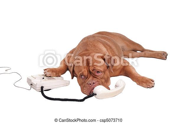 Perro al teléfono - csp5073710