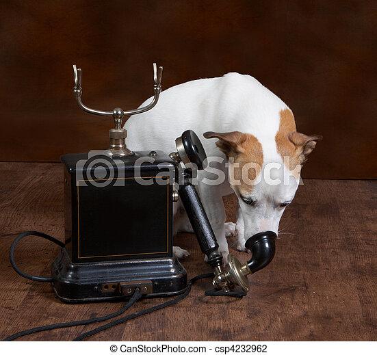 Perro al teléfono - csp4232962