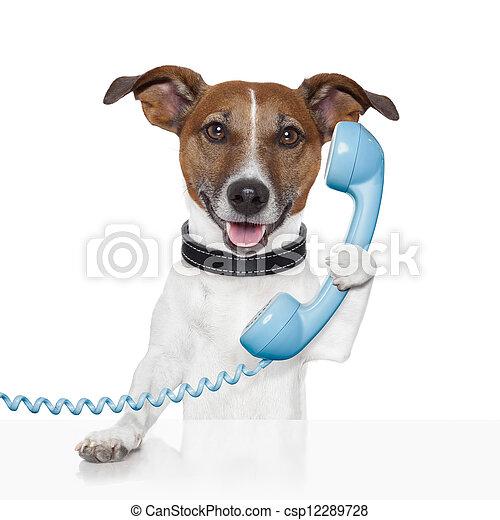 Perro al teléfono hablando - csp12289728