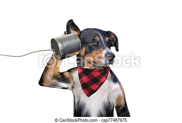 perro, can), (tin, teléfono - csp77487975