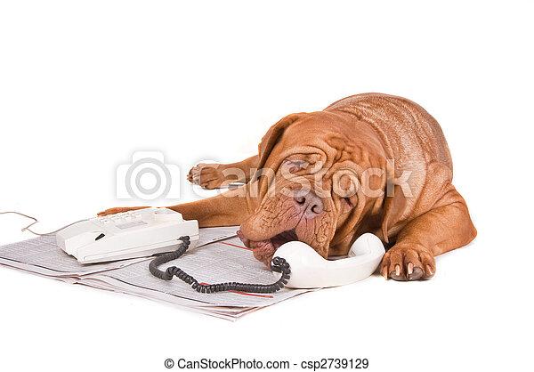 Perro discutiendo por teléfono - csp2739129