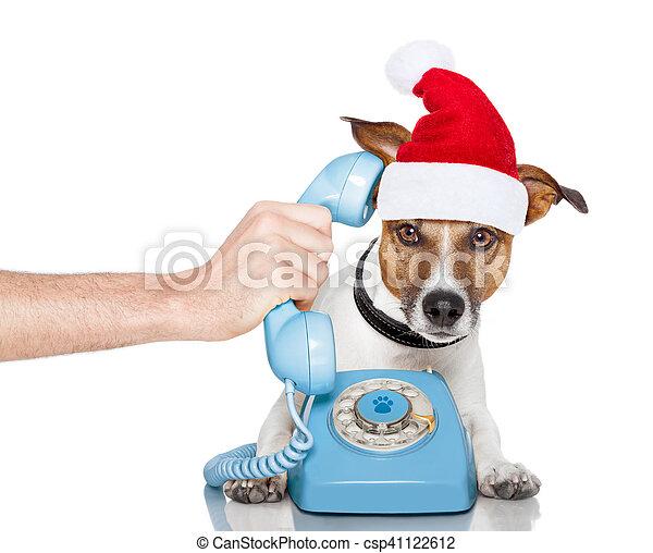 Perro en el teléfono de Navidad sombrero de Santa - csp41122612
