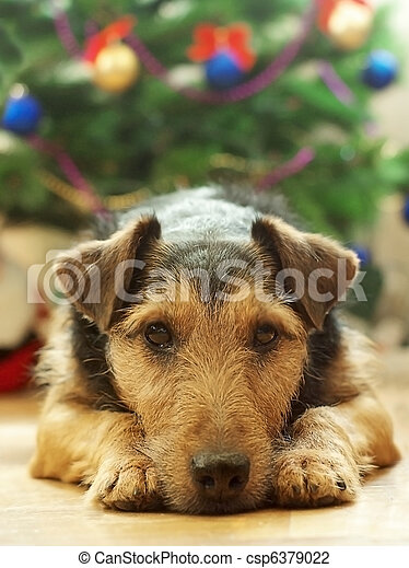 Perro en Navidad - csp6379022