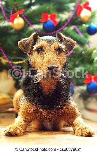 Perro en Navidad - csp6379021