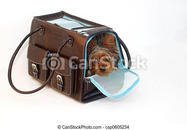 Perro en una bolsa - csp0605234
