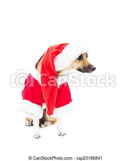 Perro gracioso en trajes de Navidad - csp23186841
