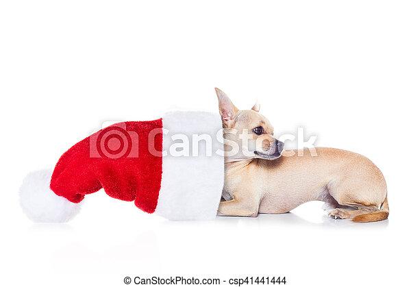 Perro navideño de Santa - csp41441444