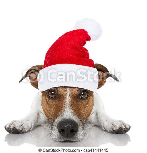 Perro navideño de Santa - csp41441445