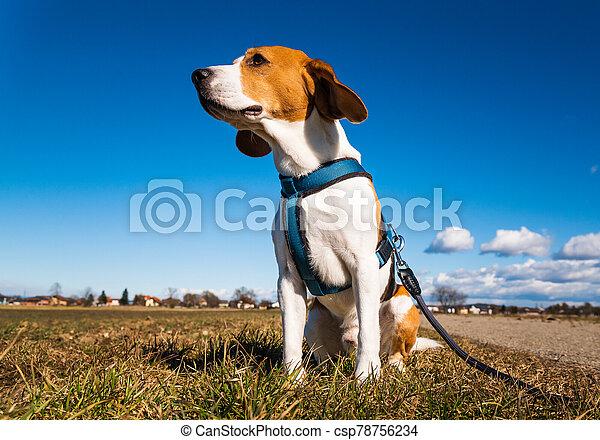 perro, road., rural, espacio, paisaje, día, sabueso, soleado, copia - csp78756234