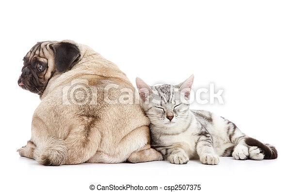 Perro y gato - csp2507375