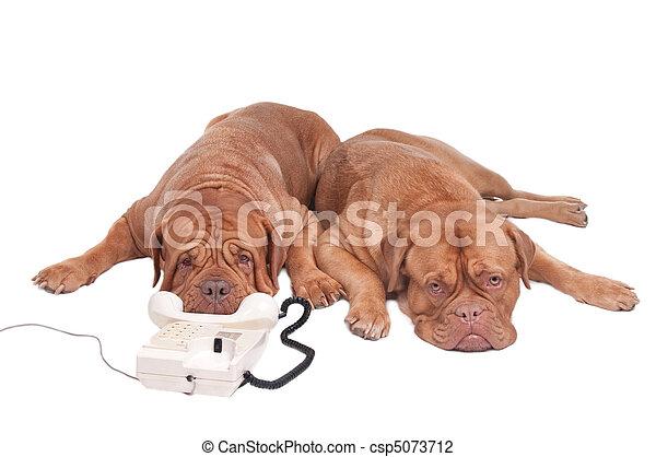Perros al teléfono - csp5073712