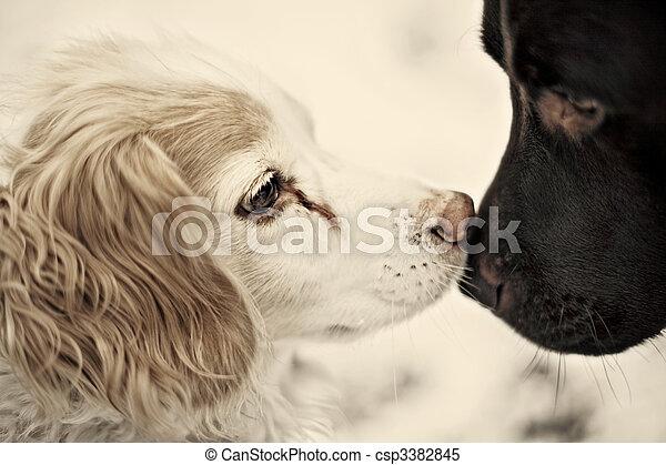Perros besándose - csp3382845